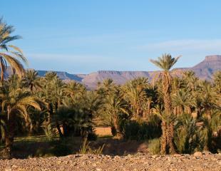 desert-897671_1280.jpg