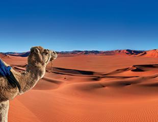 desert_.jpg