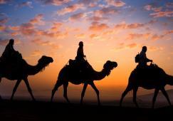Caravane, chameau