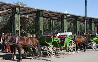 horse and carriage for a good tour in Marrakech tourism in morocco