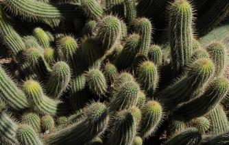 beautiful cactus in taroudant tourism in morocco