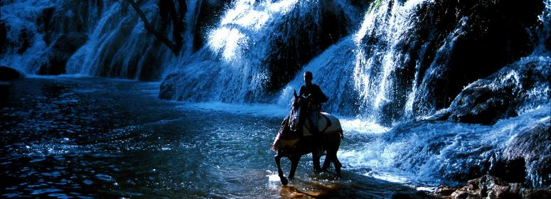 horse in waterfalls in ifrane tourism in morocco