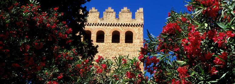 casbah and natural flawers in chefchaouen tourism in morocco