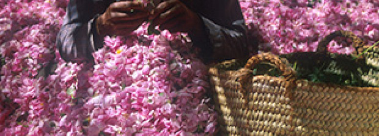 flawers-festival-in-kelaat-magouna-in-morocco-bio-tourism