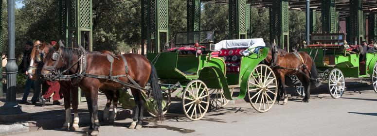 horse and carriage for a good tour in Marrakech-tourism-in-morocco