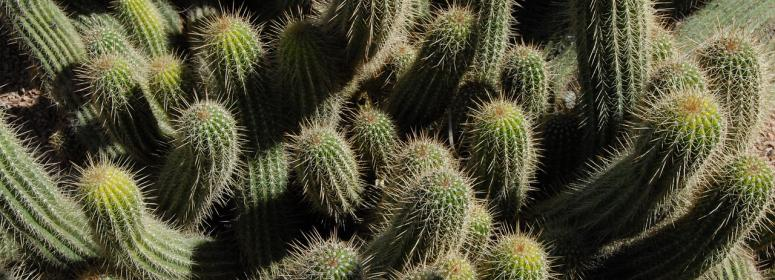 beautiful cactus in taroudant tourism-in-morocco