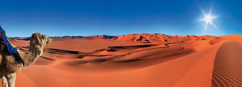 sun-and-camel-in-the-desert-morocco-tourisme