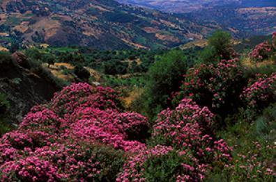 natural-landscape-and-flowers-for-relaxing-morocco-travel