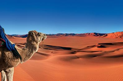 camels-in-the-desert-of-morocco-tourism