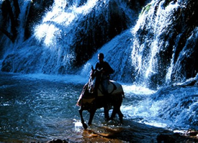 waterfalls and horse in the water source in ifrane natural tourism in morocco