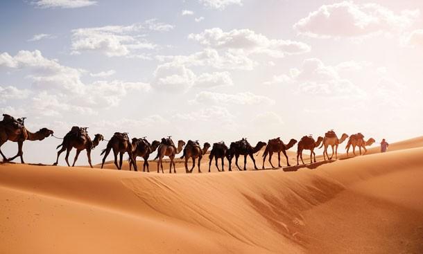 berber-with-caravan-camel-sahara-desert-morocco-at-sunrise-roserunn.jpg