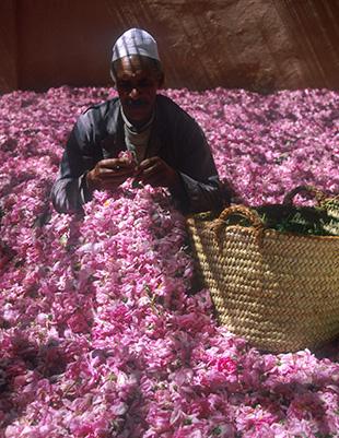 kelaa mgouna -festival de rose -nature-BIO