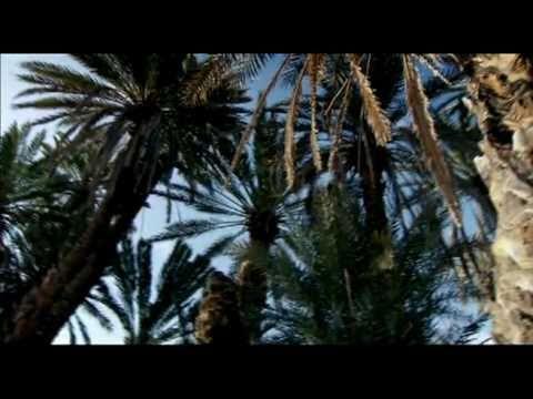 Marrakech - Association Amal Palmeraie
