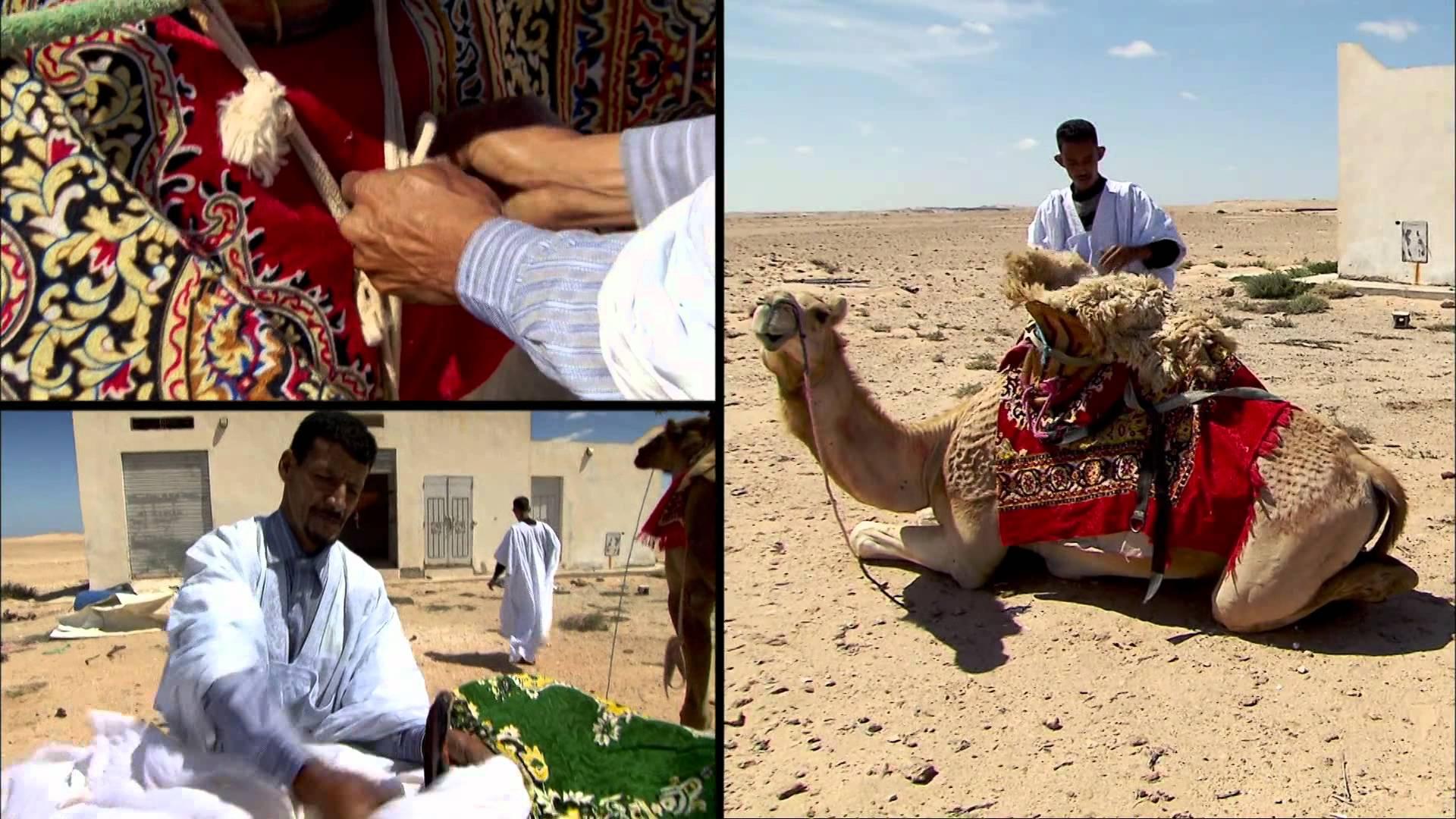 à la rencontre de... Habiboullah Dimli - Eleveur de Chameaux à Dakhla