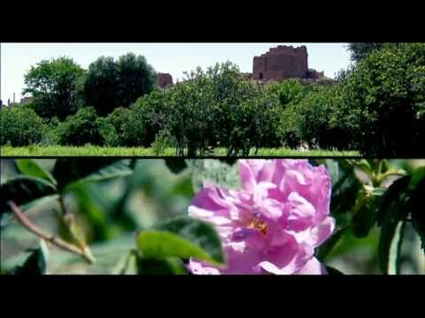 Ouarzazate - Coopérative de roses