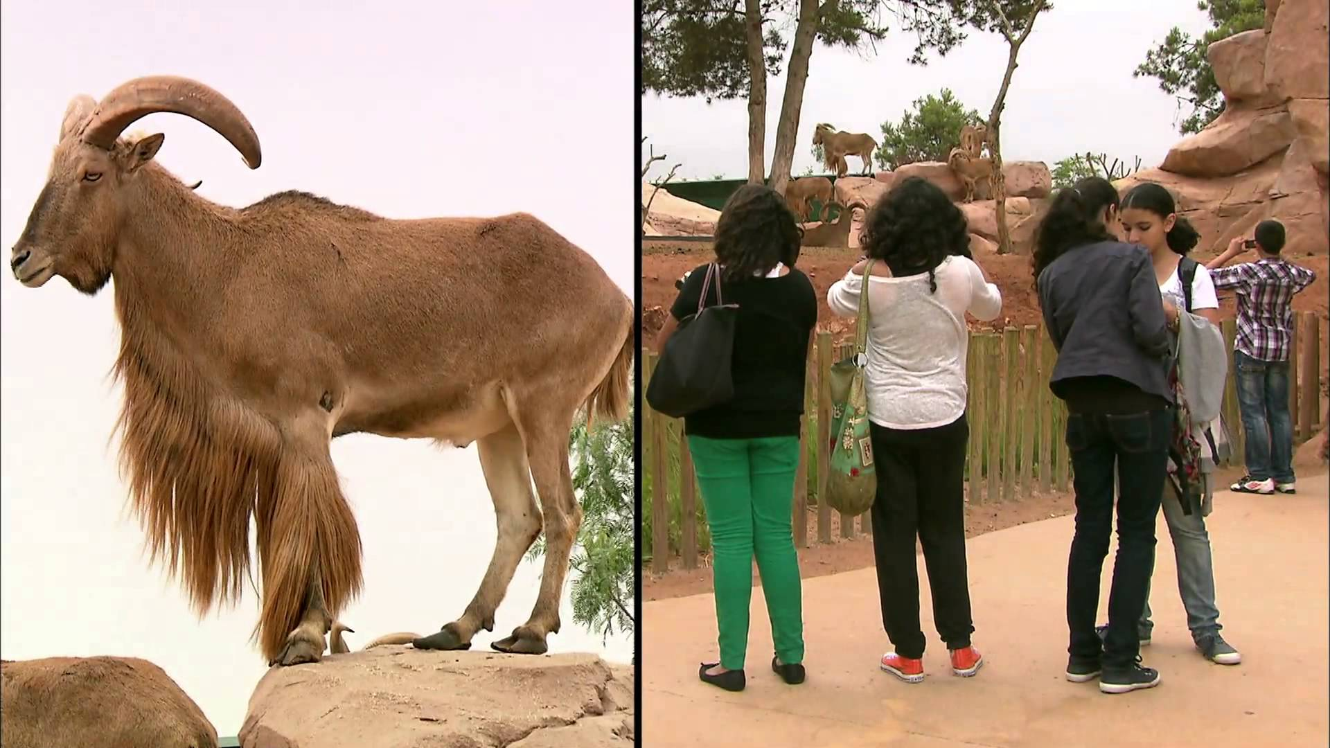 A la rencontre... de Salma Slimani - Programme éducation du zoo à Rabat