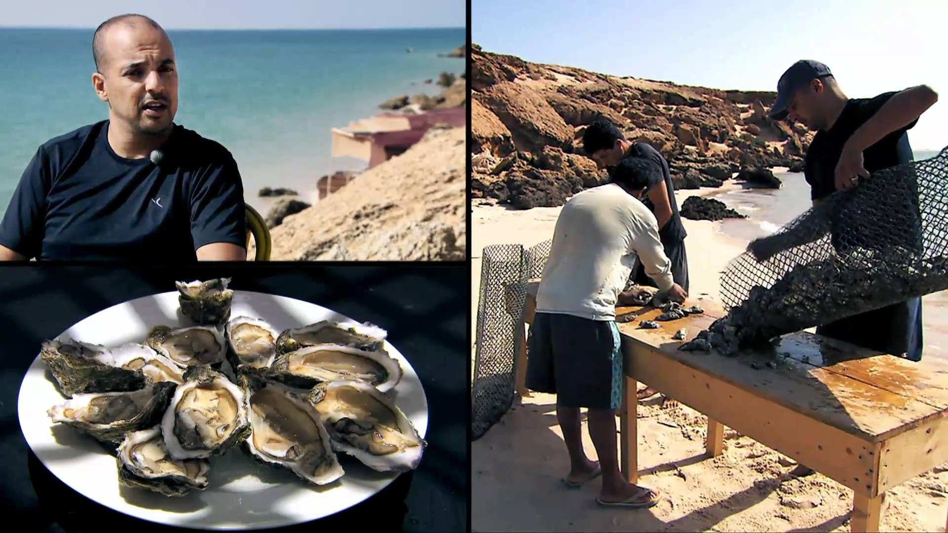 Dakhla - Elevage d'huîtres